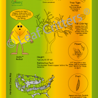 Leaf Critters® – Tree Trail Signage